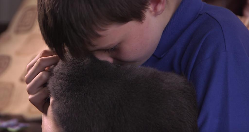 gato terapia houdini 1