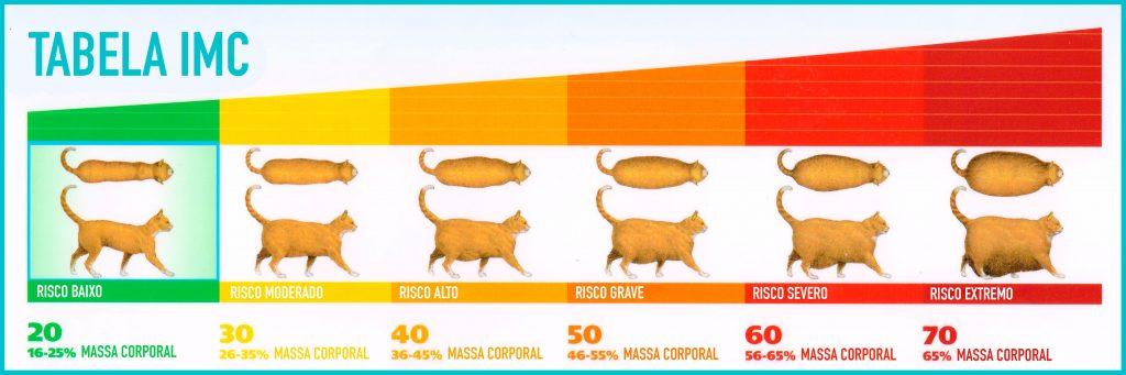 obesidade-nos-gatos-tabela-gordo-corpo