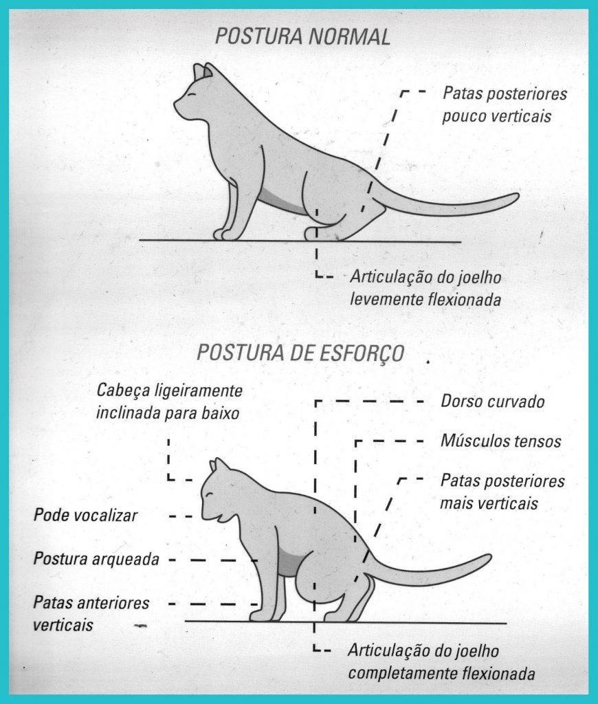postura-cistite-trato-urinario-felino
