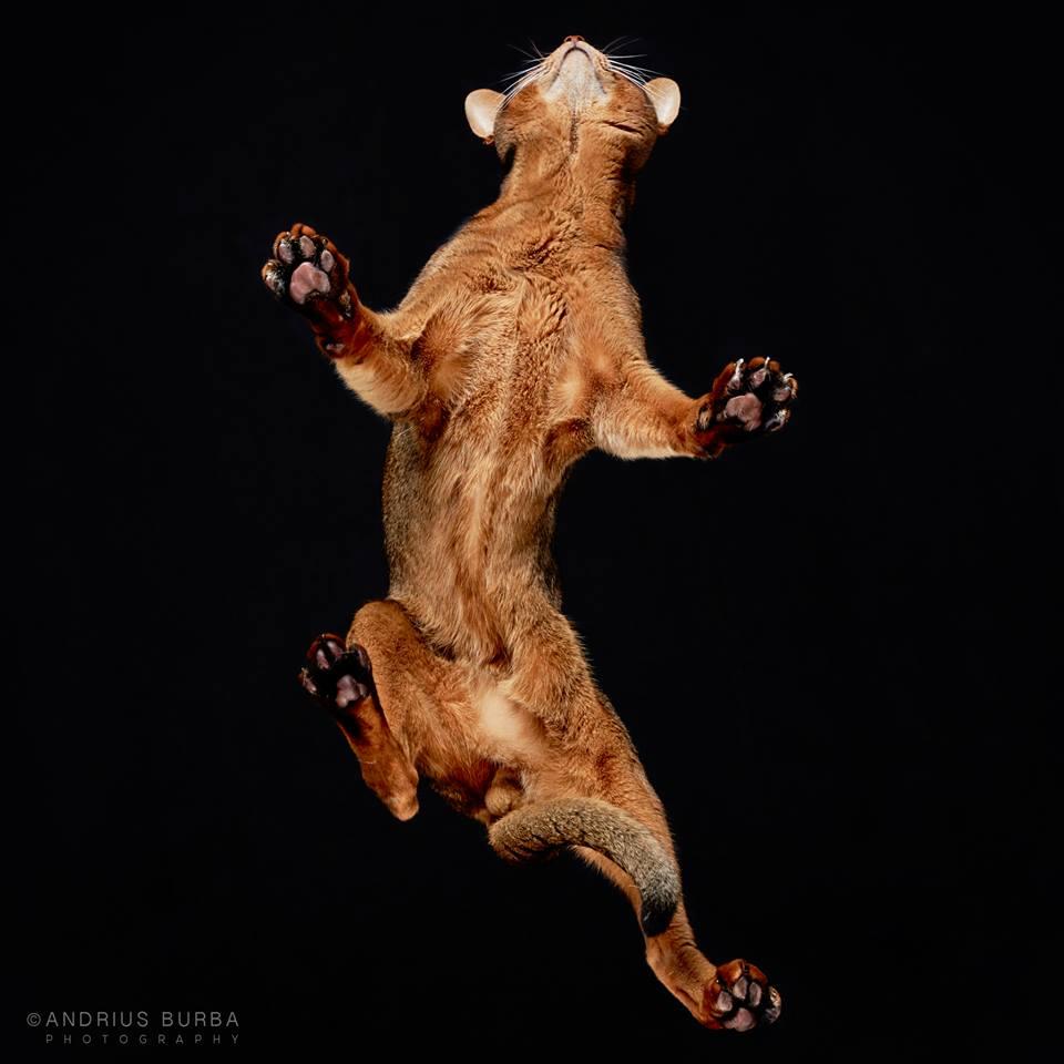 andrius-burba-fotografia-gatos-1