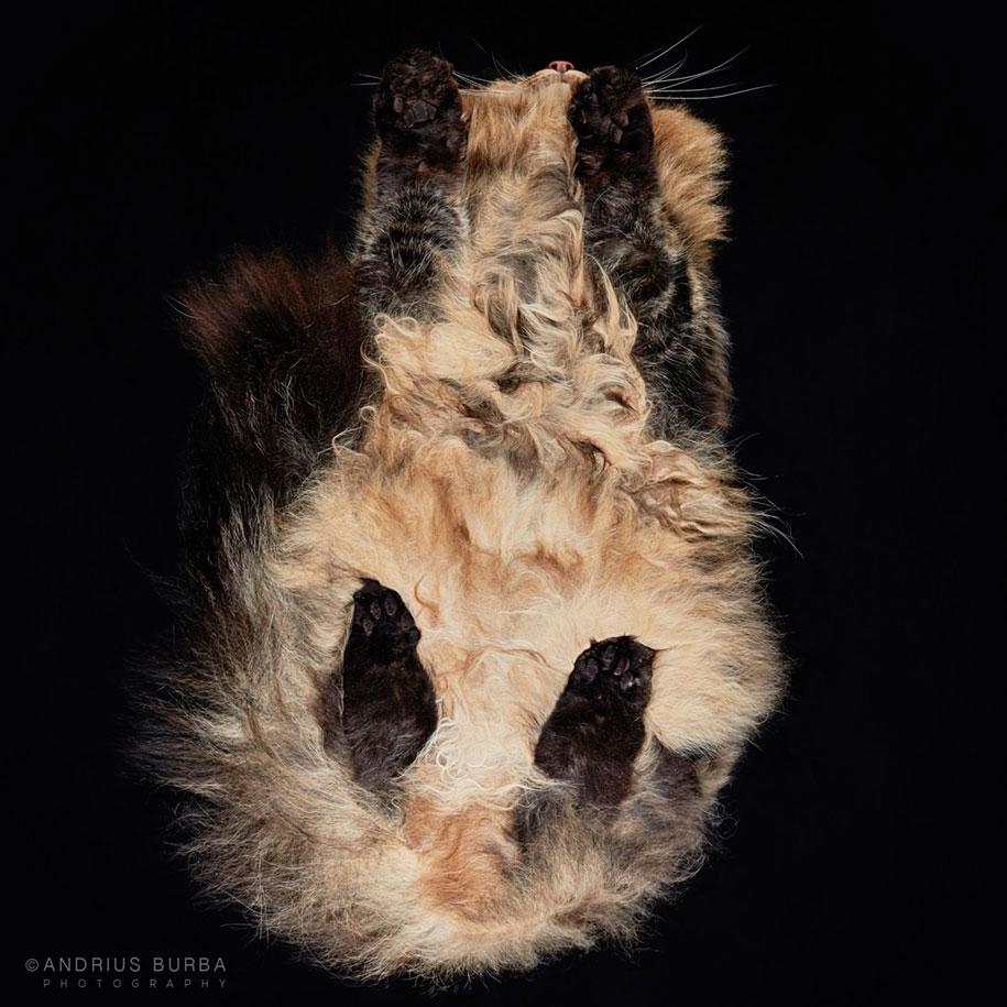 andrius-burba-fotografia-gatos-12