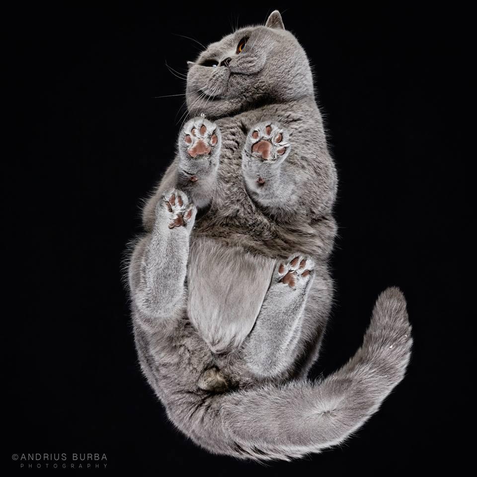 andrius-burba-fotografia-gatos-2