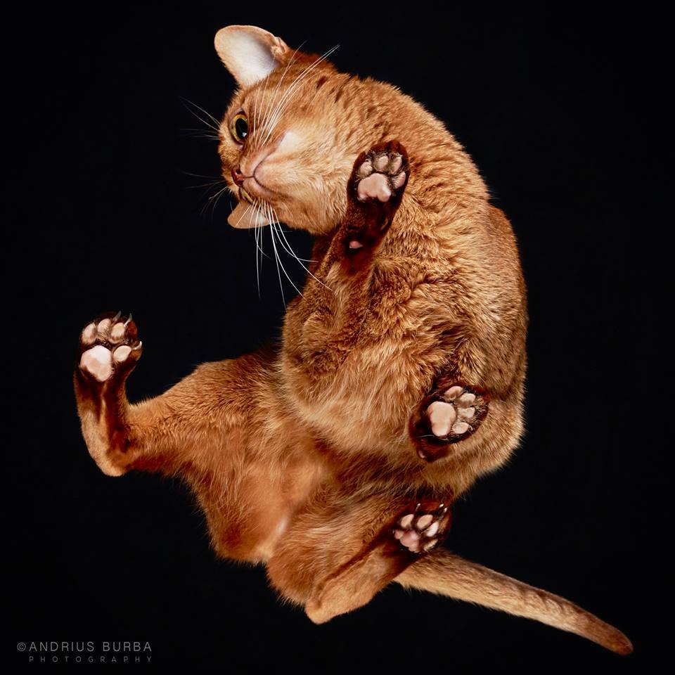 andrius-burba-fotografia-gatos-3