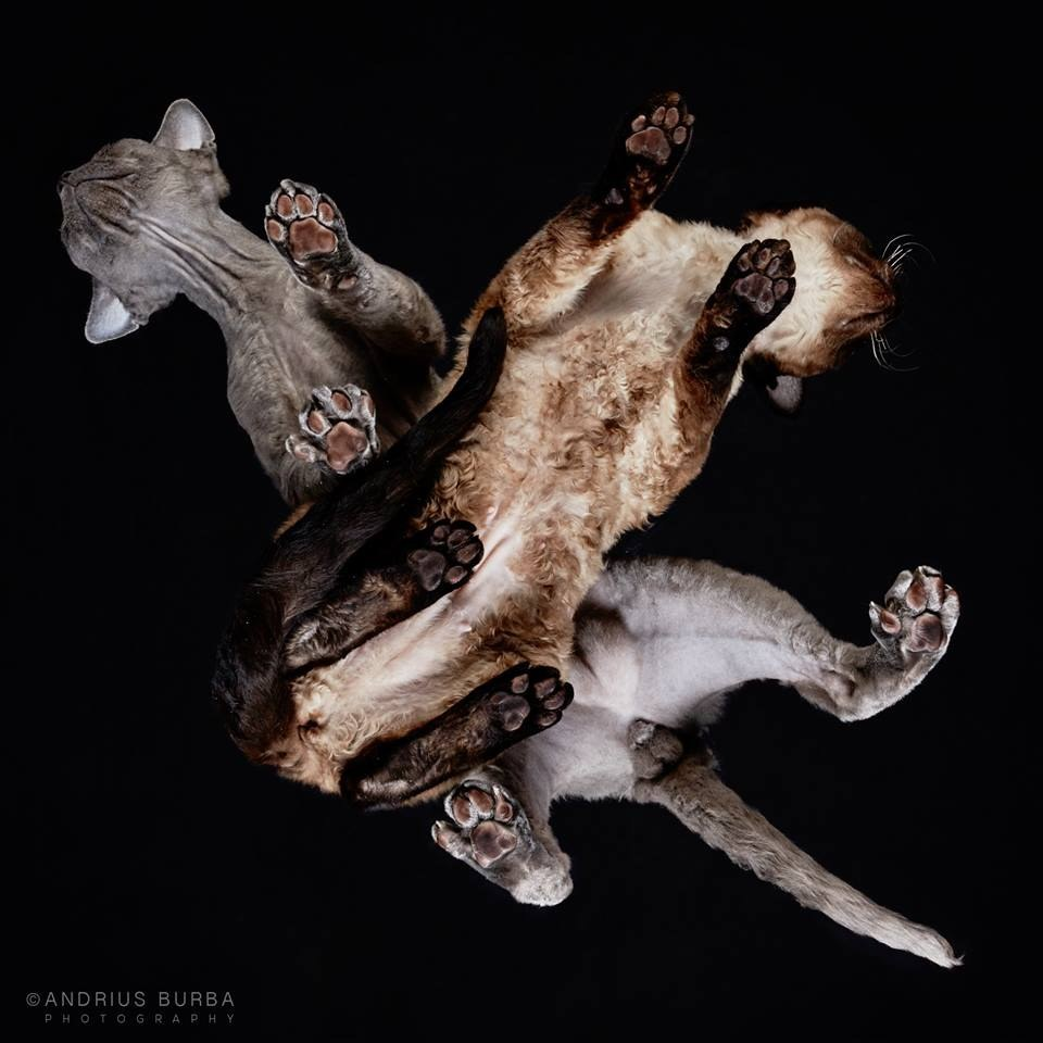 andrius-burba-fotografia-gatos-4
