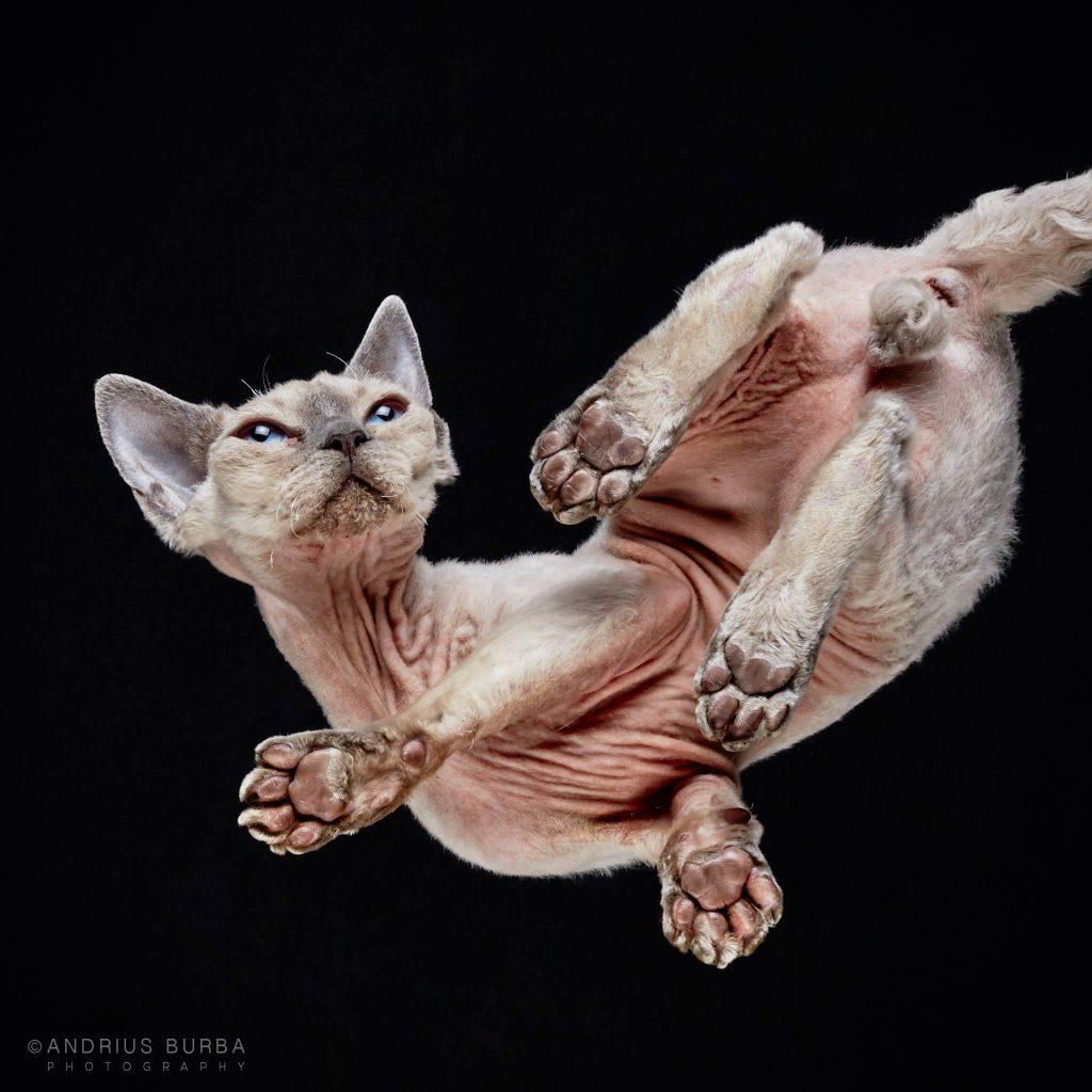andrius-burba-fotografia-gatos-5