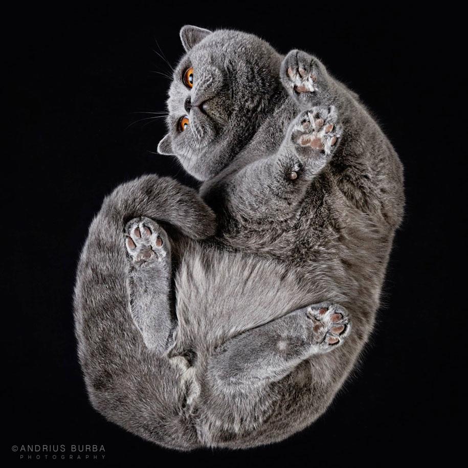 andrius-burba-fotografia-gatos-7