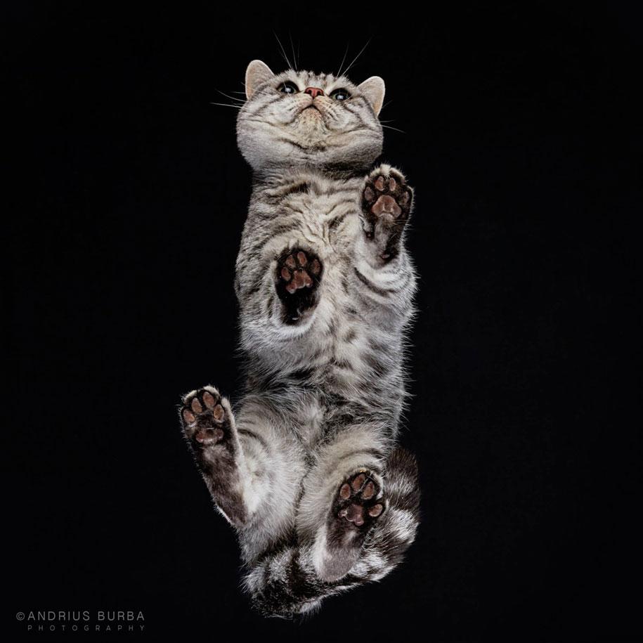 andrius-burba-fotografia-gatos-8