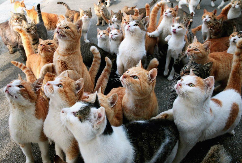 paraiso-dos-gatos-japao-20