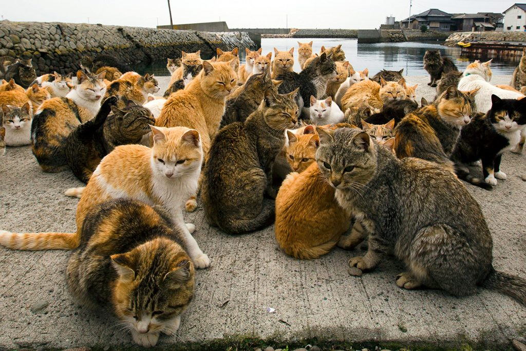paraiso-dos-gatos-japao-7
