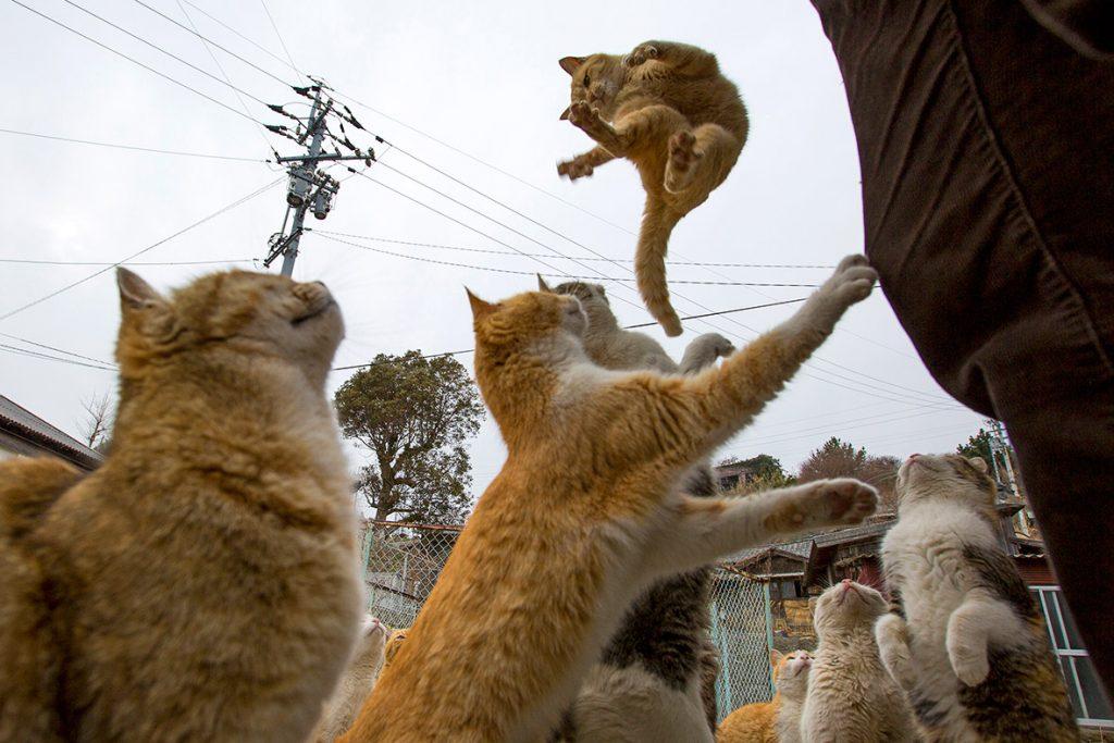 paraiso-dos-gatos-japao-8