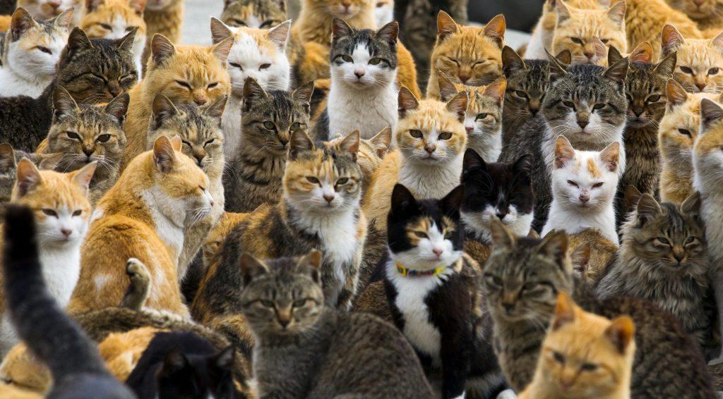 paraiso-dos-gatos-japao-9