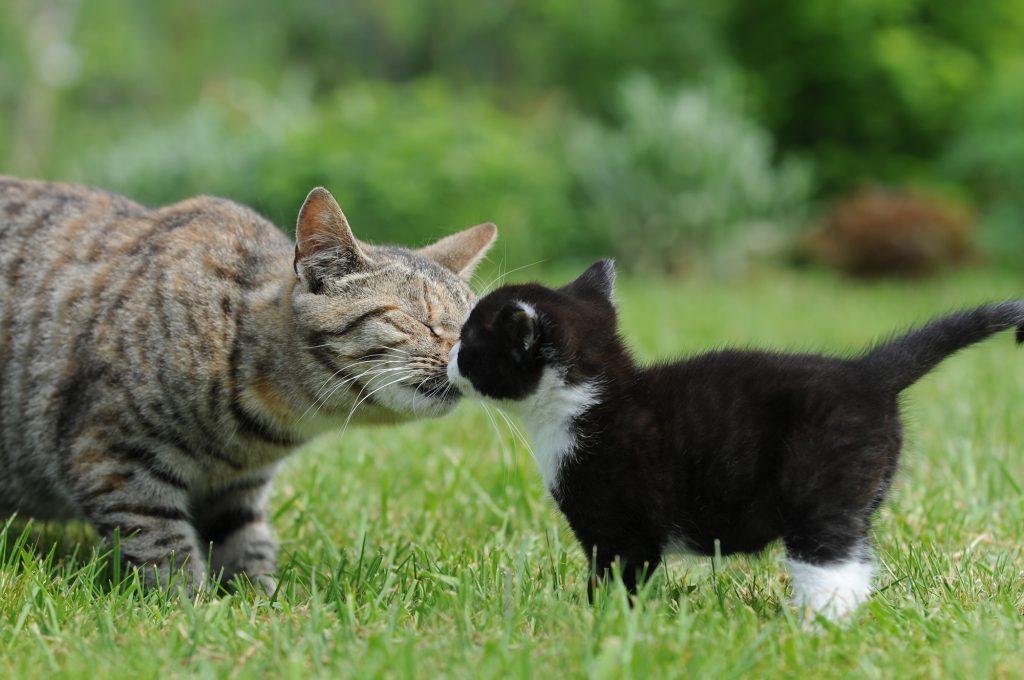 animais-reconhecem-parentes-intriga-a-ciencia-1
