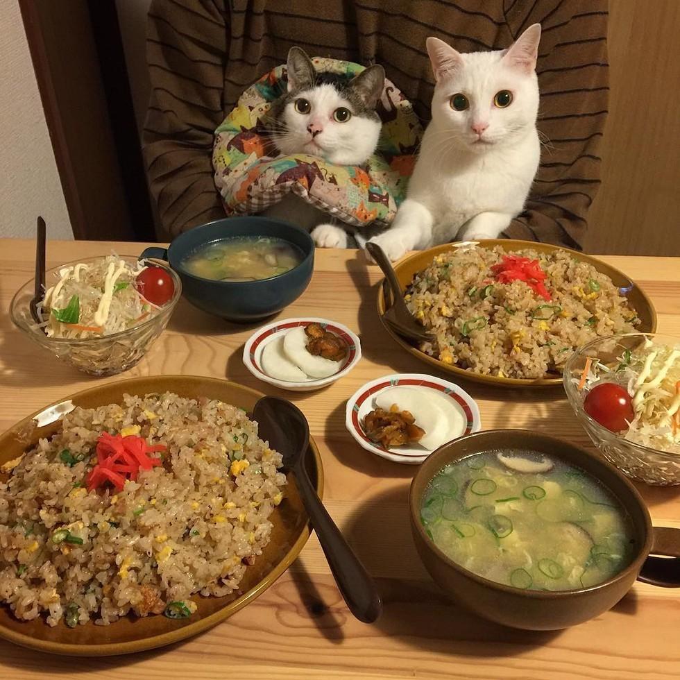 casal-fotogra-fa-gatos-ver-a-comer-naomiuno-11
