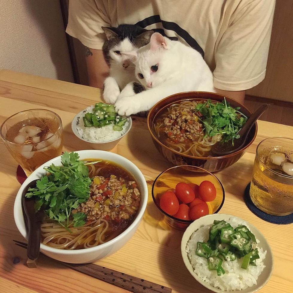 casal-fotogra-fa-gatos-ver-a-comer-naomiuno-3