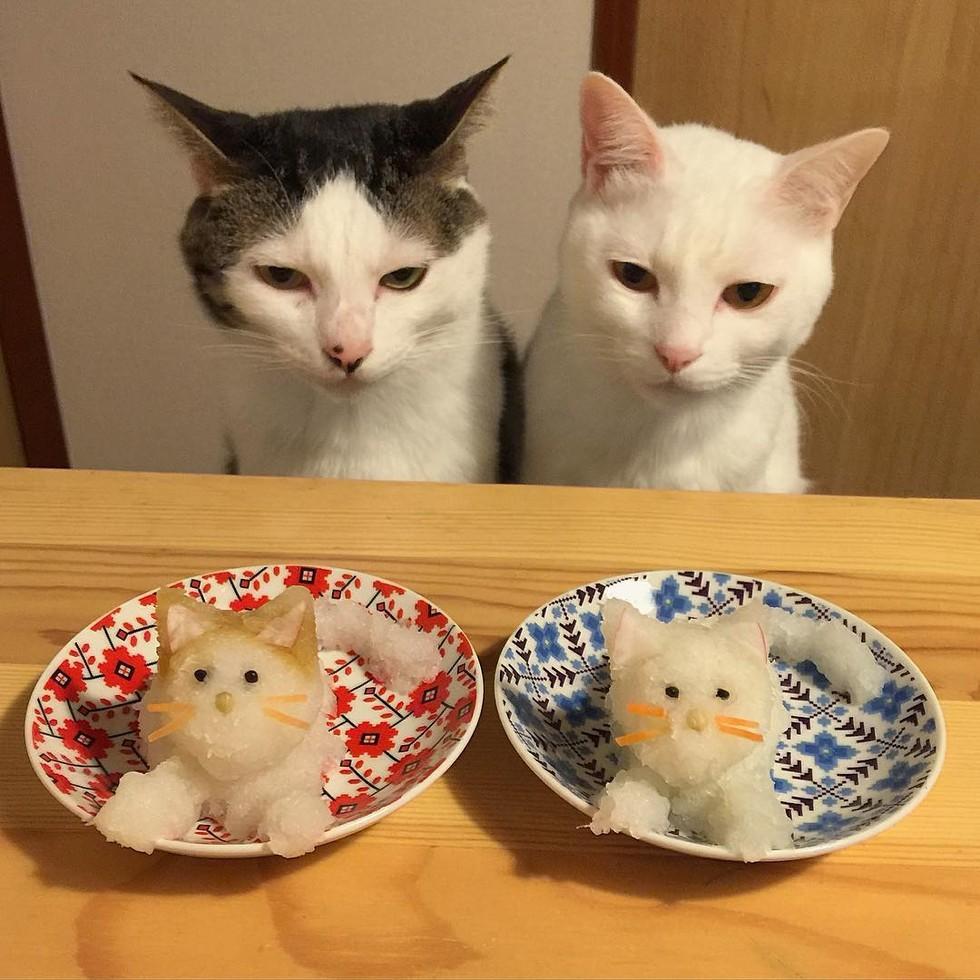 casal-fotogra-fa-gatos-ver-a-comer-naomiuno-7