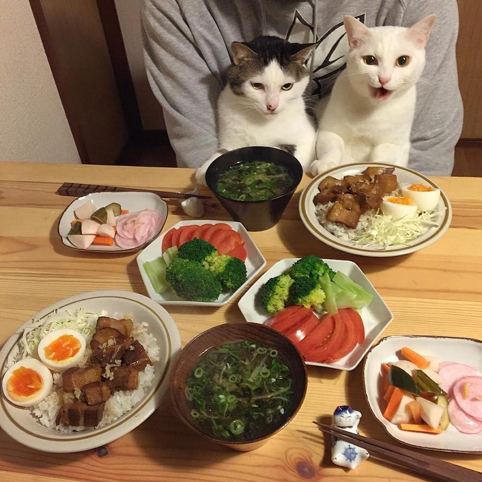 casal-fotogra-fa-gatos-ver-a-comer-naomiuno-8