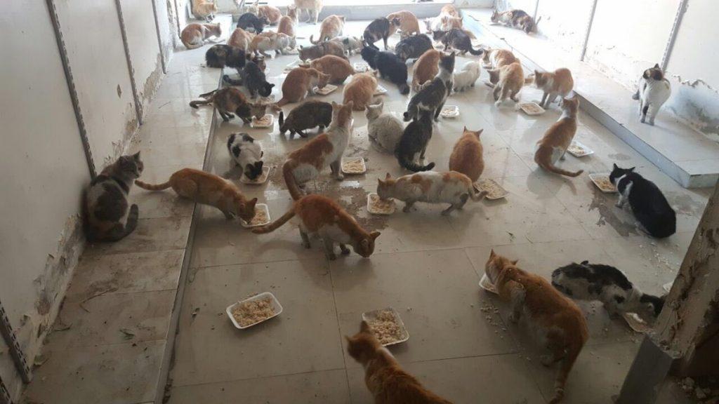 o-homem-que-cuida-dos-gatos-abandonados-em-aleppo-3