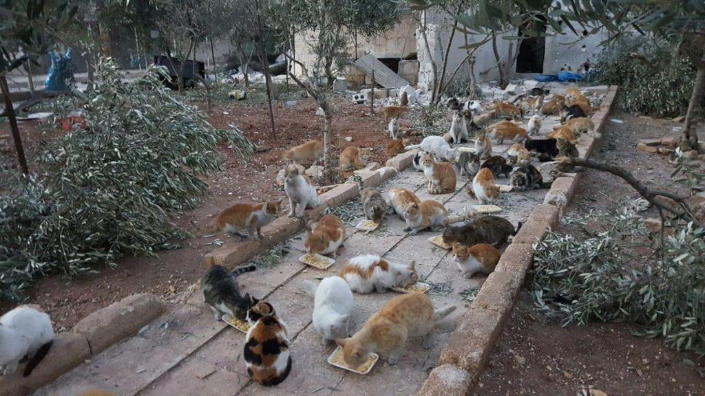 o-homem-que-cuida-dos-gatos-abandonados-em-aleppo-4