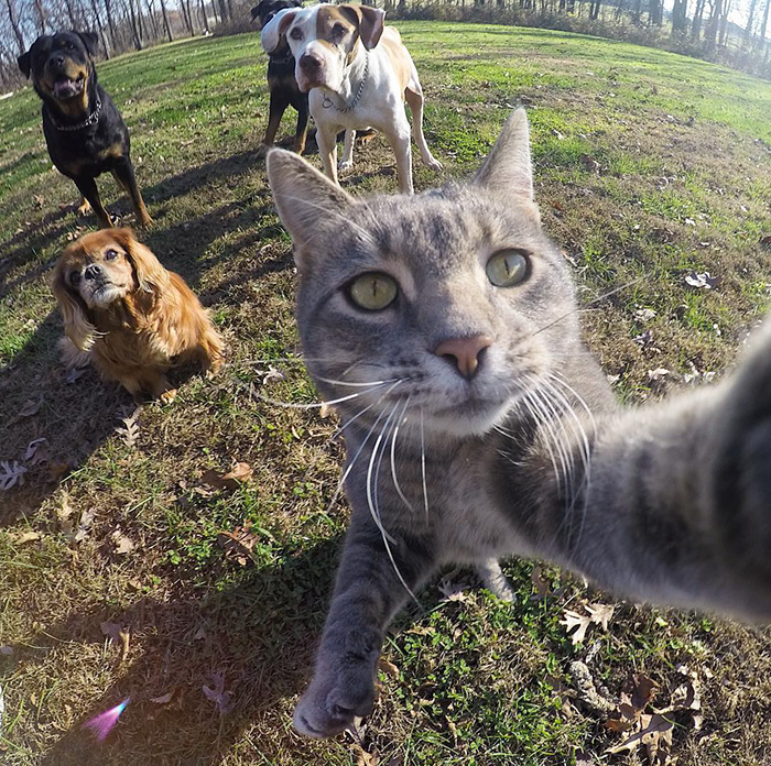 Gatos e Selfies Social Media HILARIANTE