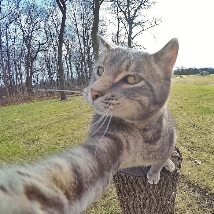 gatos-e-selfies-social-media-hilariante-2