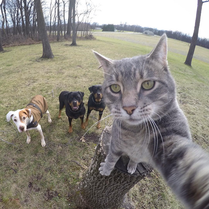 gatos-e-selfies-social-media-hilariante-3
