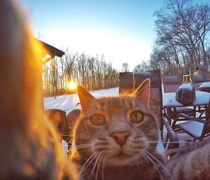 gatos-e-selfies-social-media-hilariante-4