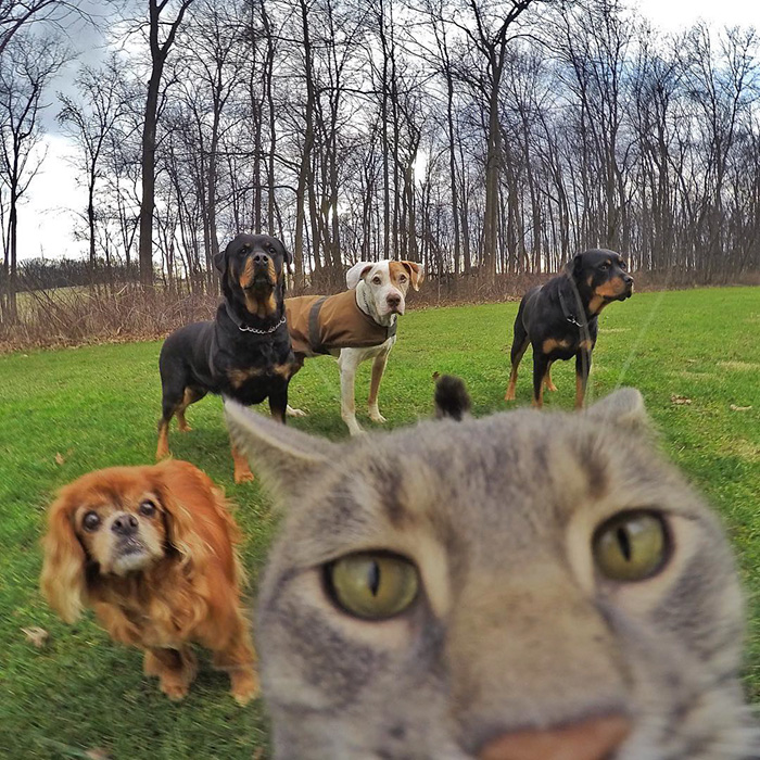 gatos-e-selfies-social-media-hilariante-5