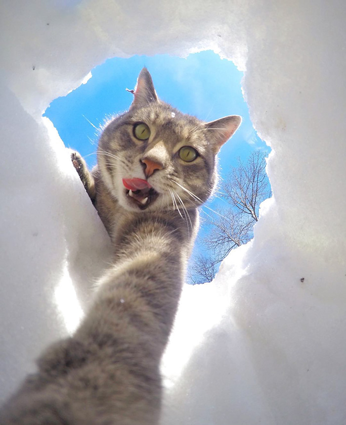 gatos-e-selfies-social-media-hilariante-6